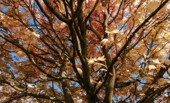 Binsey Poplars, by Gerard Manley Hopkins, Sj